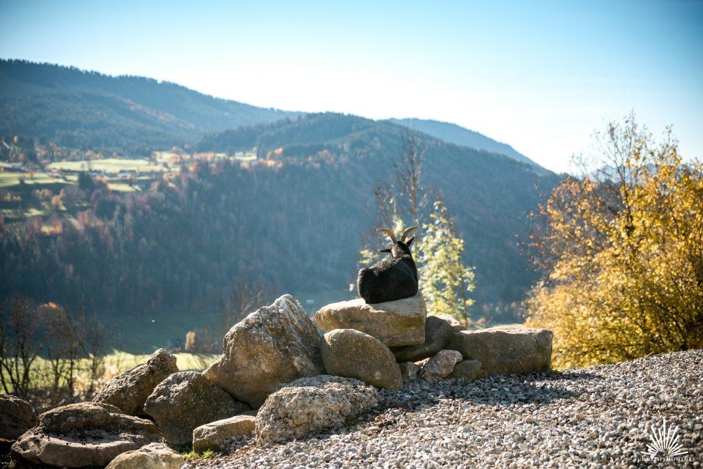 Geißbock in den Bergen