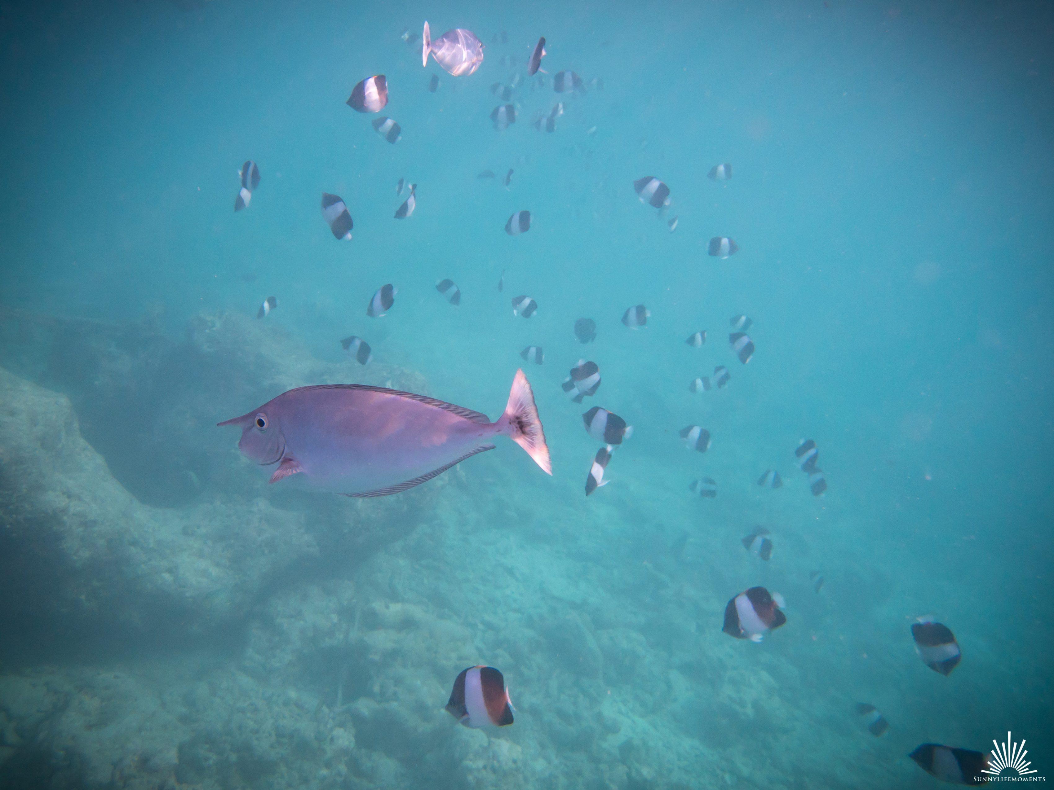 Fischschwarm im indischen Ozean